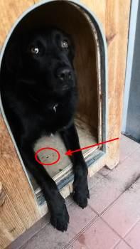 pavimento riscaldato cuccia per cane